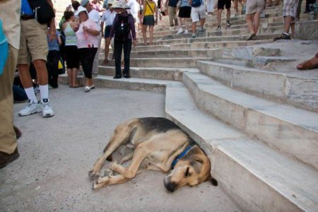 Top court prosecutor asks for strict implementation of animal protection law