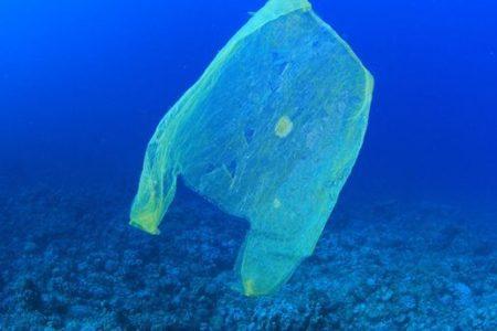 Ithaca bans plastic bags