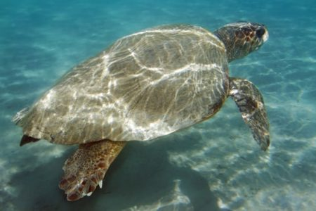 EasyJet passengers left high and dry in Greece – in part by mating turtles