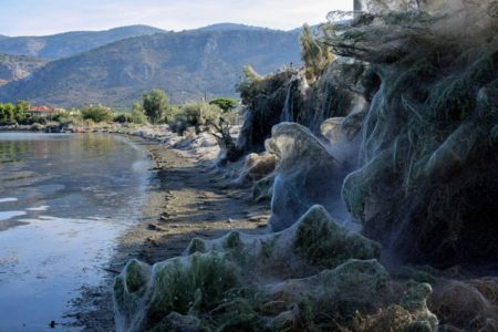 Giant spiders' web covers Greek beach